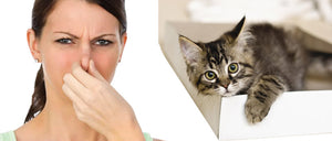 Eliminate the Smell of Cat Urine from Your Carpet