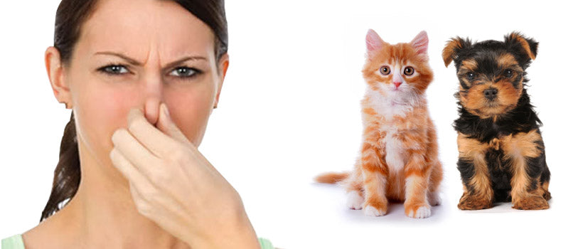 How to Remove Domestic Pet Odors