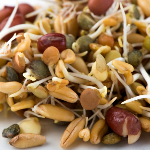 Sprouting Seeds - Ancient Eastern Blend - 100g