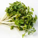 Sprouting Seeds - Arugula - 100g