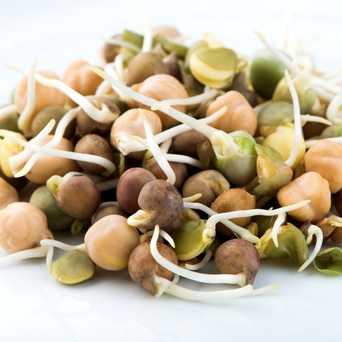 Sprouting Seeds - Crunchy Bean Mix - 100g