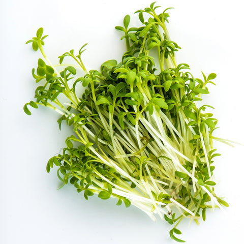 Sprouting Seeds - Curly Cress - 100g