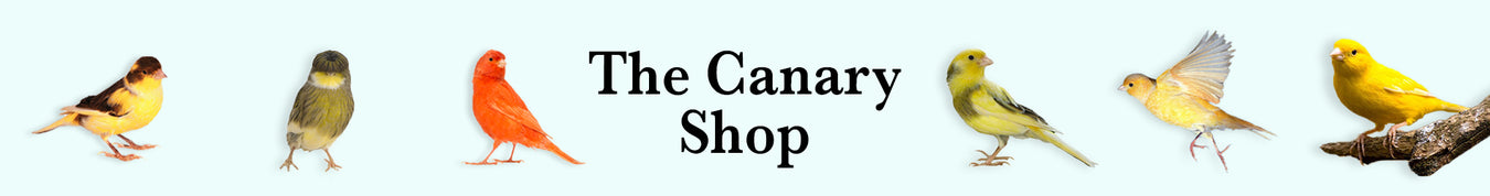 The Canary Shop