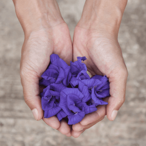 Conditioning Shampoo Bar Butterfly Pea Flower