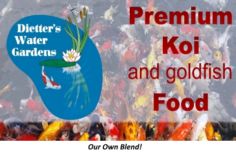 Premium Koi & Goldfish Food - Large Pellets