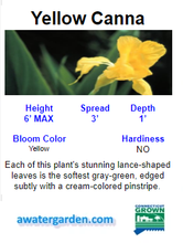 Load image into Gallery viewer, Tropical Water Canna (Yellow Flower)