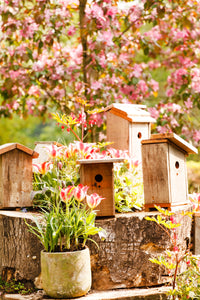 bird boxes and spring blossom