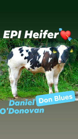 EPI Show Heifer-By: Don Blues/Daniel O'Donovan #WITHDRAWN#