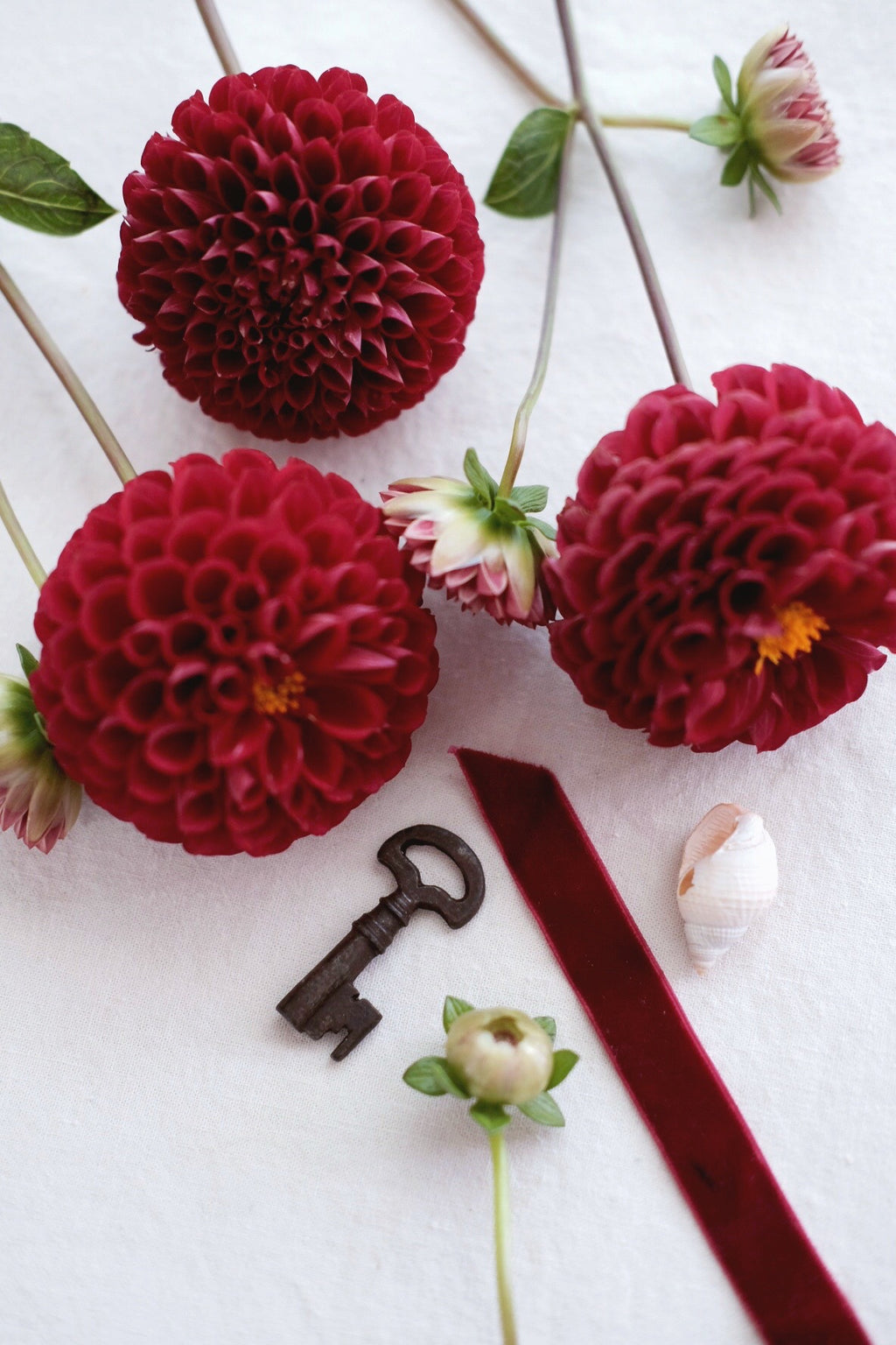 Root + The Ruby Dahlia Society digital Membership