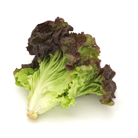 홍상추 Red Leaf Lettuce - Each