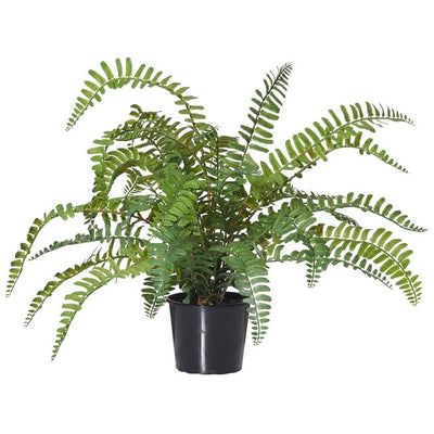 Fern Pick Garden Pot 35cm