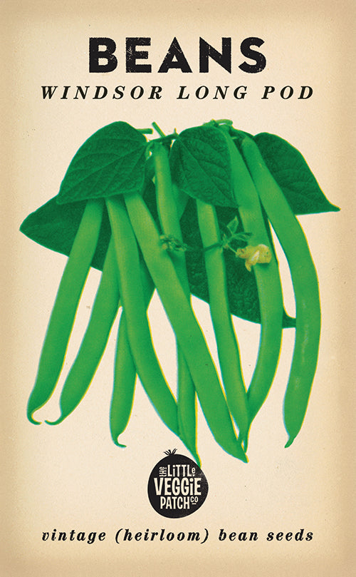 The Little Veggie Patch Co. Windsor Long Pod Bean Seeds
