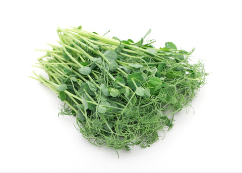 Sprouts - Snow Pea