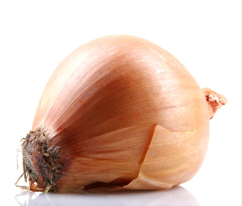 Onion - Gold Shallot