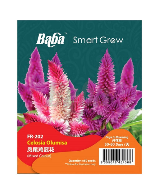 Baba Smart Grow Seed: FR-002 Celosia Olumisa-Seeds-Baba E Shop