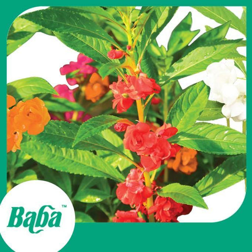 Baba Smart Grow Seed: FR-004 Garden Balsam-Seeds-Baba E Shop