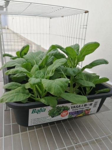 Urban Farming Package - Leafy Vegetables