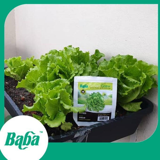 Baba Smart Grow Seed: VE-025 Lettuce Looseleaf-Seeds-Baba E Shop