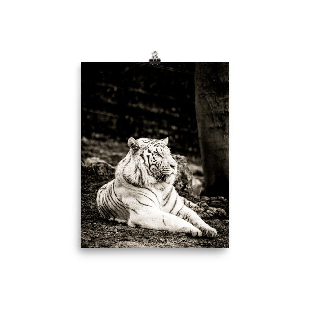 Majestic And Relaxed Tiger In The Woods Poster - Artouchmedia