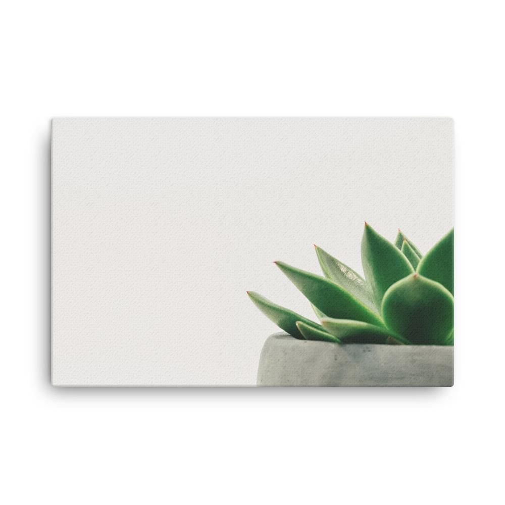 Minimal Plant In Stone Pot Canvas Art Print - Artouchmedia