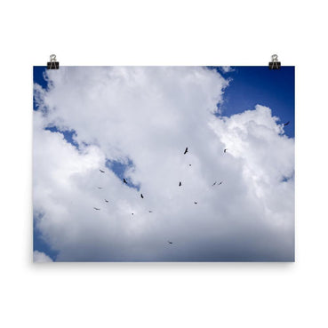 Birds In The Sky Poster
