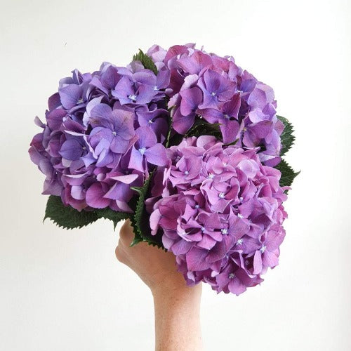 NEW! Beautiful seasonal hydrangeas bouquet!