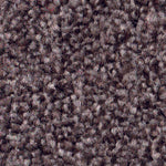 CFS Monarchy Carpet Sepia - C2B Trade Store