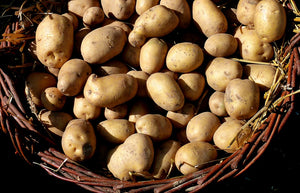 Russet Potatoes (5lb bag)