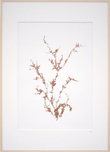 Monoprint 'Newfound plants' 50x70