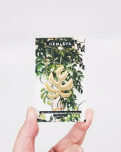 "Load image into Gallery viewer, Hemleva Rhaphidophora tetrasperma • Monstera ""Ginny"" enamel pin"