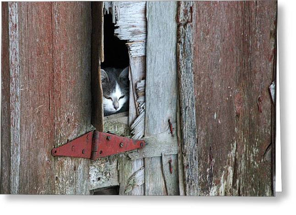 Barn Cat - Greeting Card