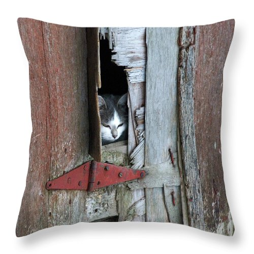 Barn Cat - Throw Pillow