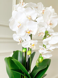 White Orchid Bundle in Chinoiserie Pot