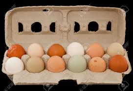 Teton Valley Raised Organic Eggs (1 dozen)