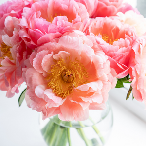Sorbet Peony- Paint By Number