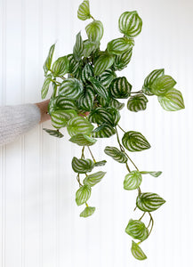 Faux Artificial Watermelon Peperomia Plant in Hand