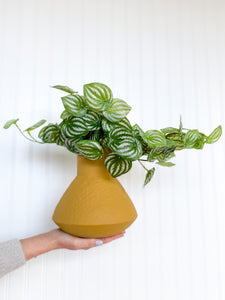 Faux Artificial Watermelon Peperomia Plant in Mastard Vase