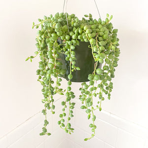 "String Of Pearls 6"" Hanger"
