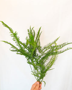 Dried Natural Fern Bunch