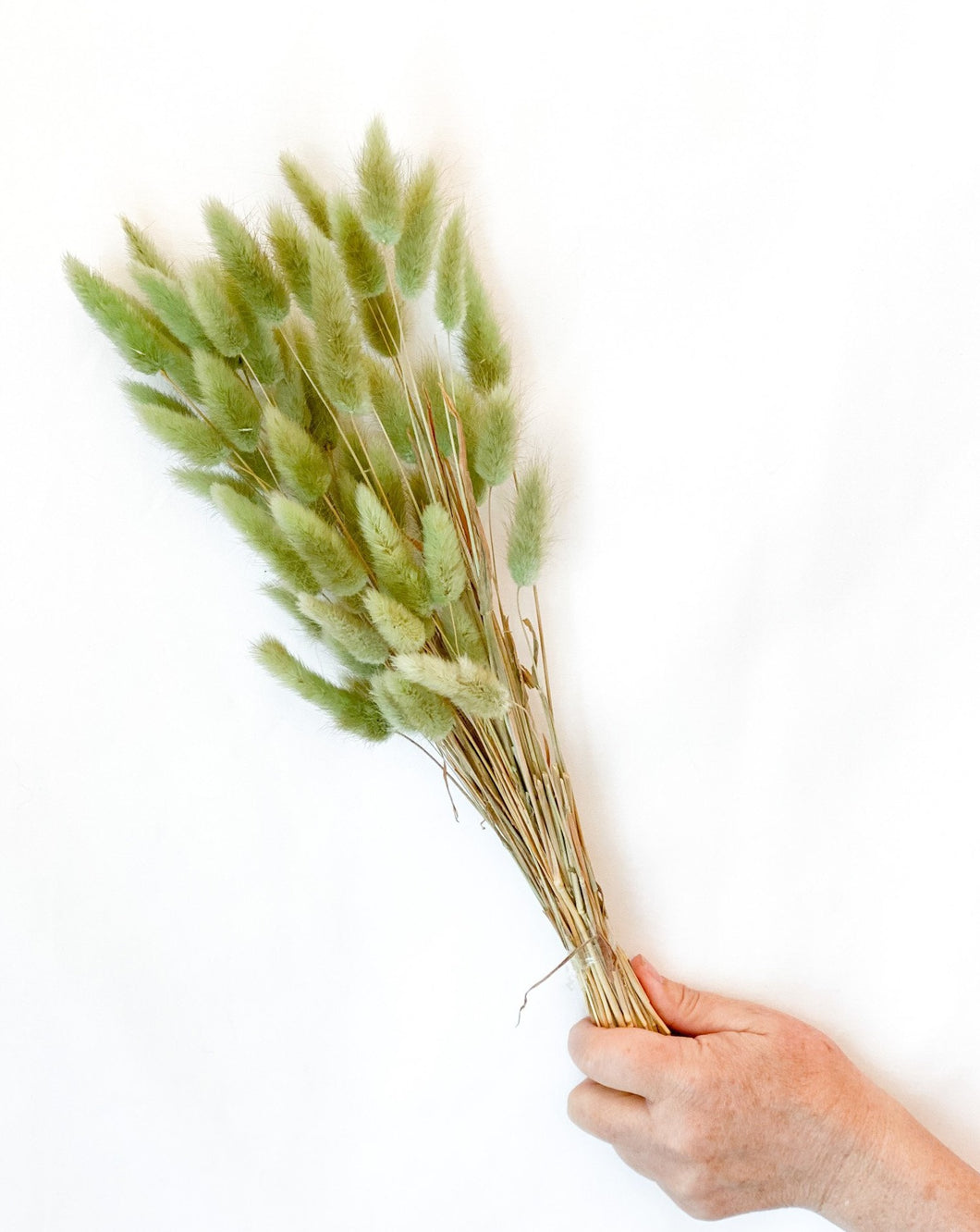 Dried Green Bunny Tail Bunch
