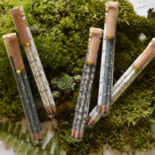 Load image into Gallery viewer, Pencil Terrarium: Set of 5 Pencils