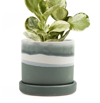 Matte Green // Minute Pot + Saucer