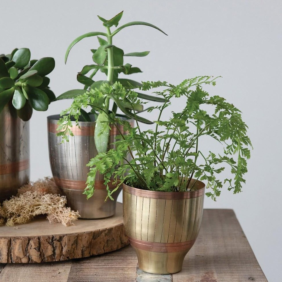 Engraved Brass and Gold/Silver Pots Shown with Plants