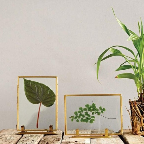 Brass Standing Photo Frames with pressed leaves on table with plant