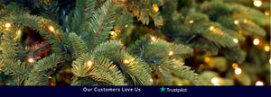 live christmas tree delivery | london grocery online