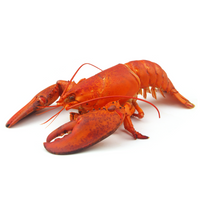 Frozen Cooked American Lobster ~350 - 400gr - London Grocery