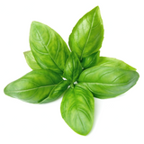 Basil 1 pack - London Grocery - Online Grocery Shopping