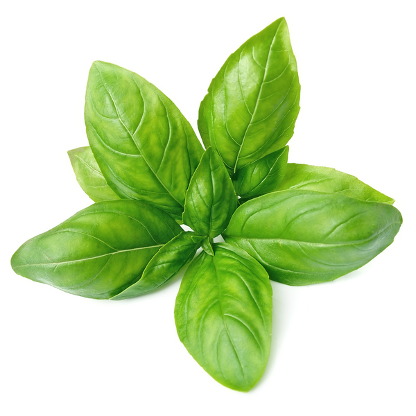 Basil 1 bunch - London Grocery - Online Grocery Shopping