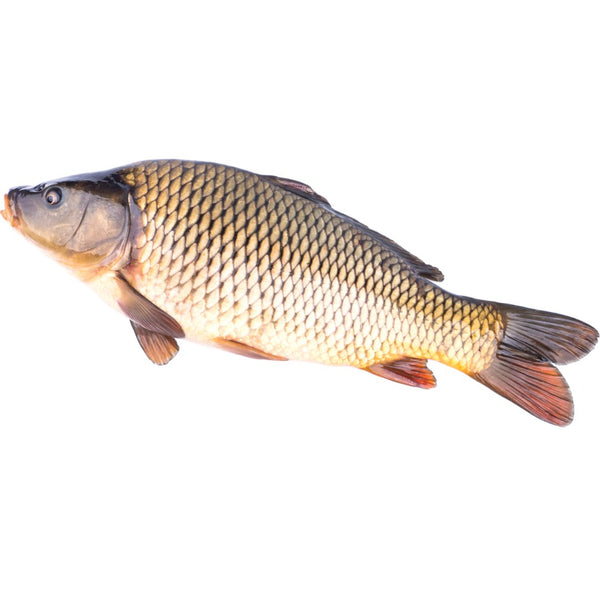 Whole Fresh Carp ~2-3 kg - London Grocery