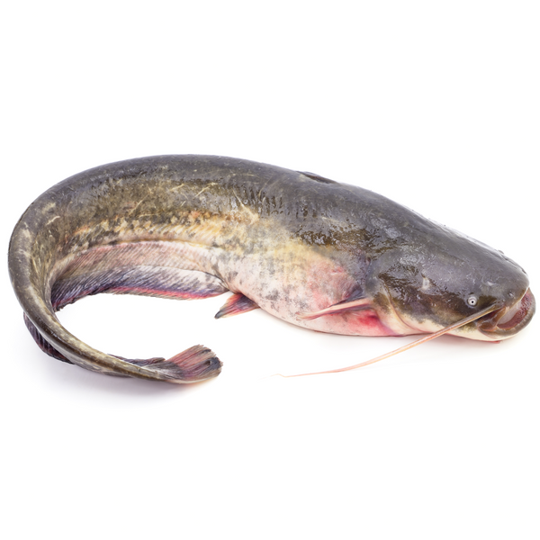 Catfish - London Grocery - Online Grocery Shopping